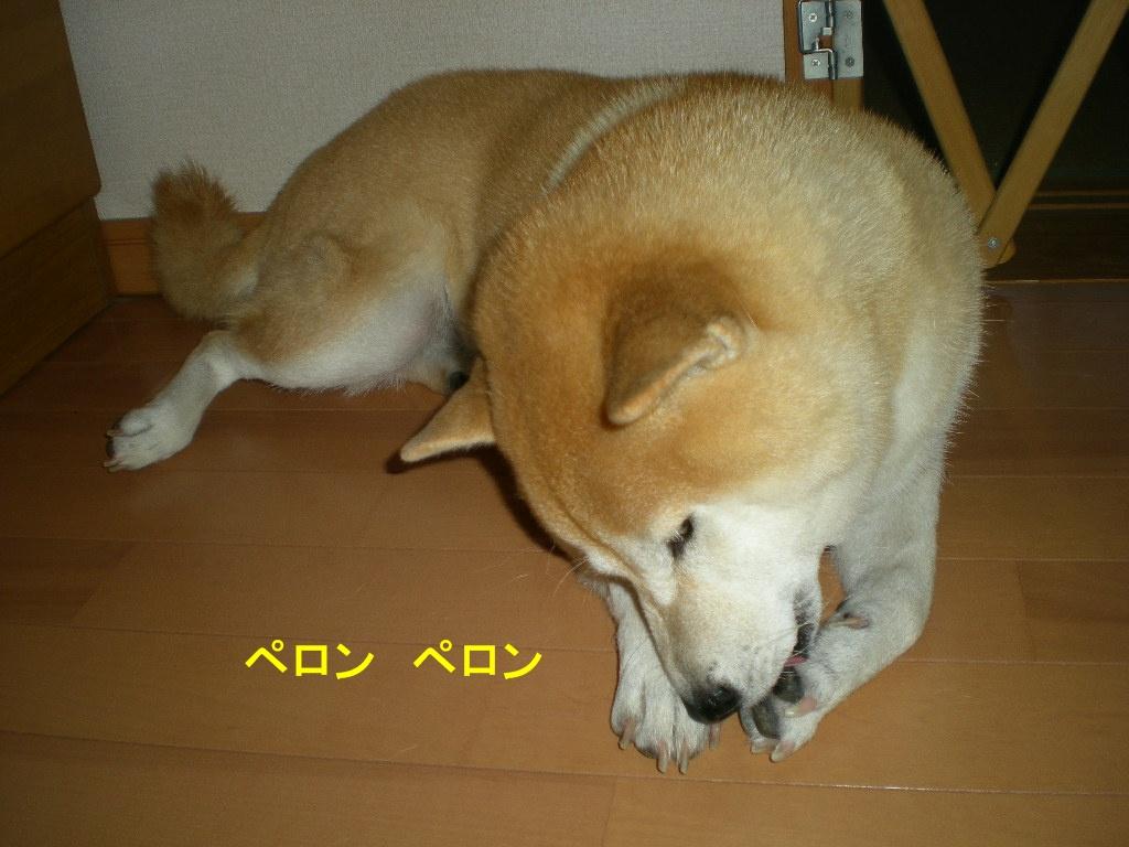 2010年10月10日(日)閑中、忙あり?_f0060461_1040516.jpg
