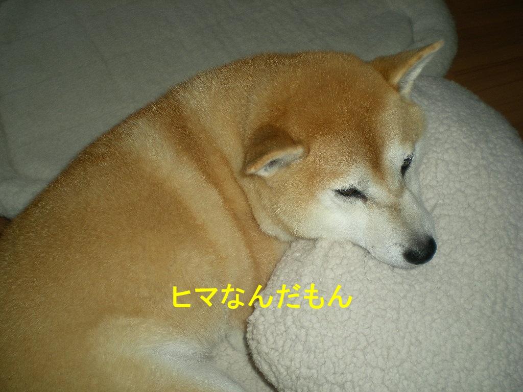 2010年10月10日(日)閑中、忙あり?_f0060461_10433379.jpg