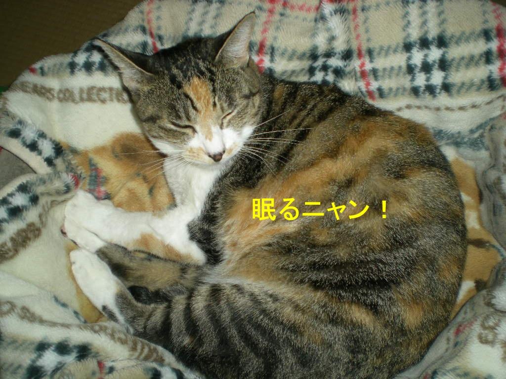 2010年10月10日(日)閑中、忙あり?_f0060461_10443986.jpg
