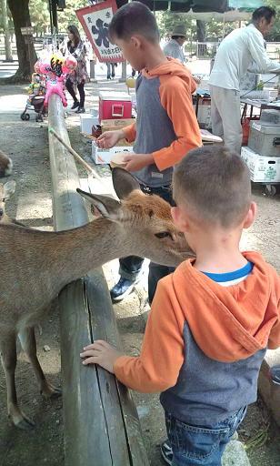 鹿の角切り_a0164633_20104855.jpg