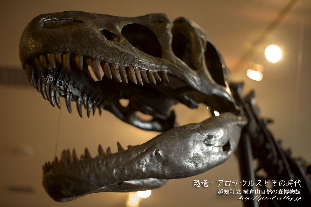 恐竜・アロサウルスとその時代_a0078341_21425052.jpg