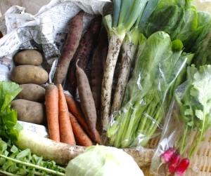 10月3週目の野菜セット不定期便のお知らせ_c0110869_2147148.jpg