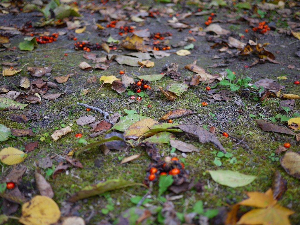 10月11日、裏山散歩_f0138096_1641425.jpg