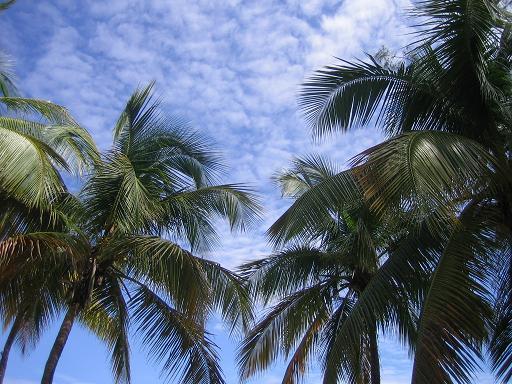 Puerto Rico_b0121501_1392452.jpg