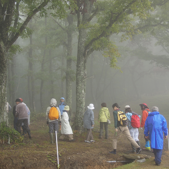 雨の深入山 2_f0099102_182932100.jpg