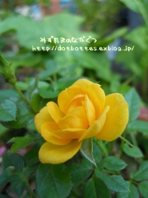 d0170109_23164467.jpg