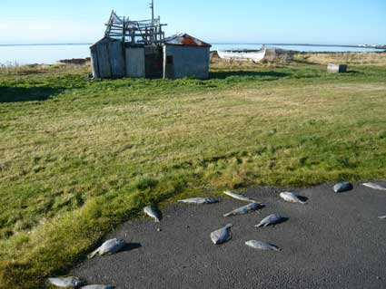 ジョン・レノンのピースタワーを楽しむ異常気象のアイスランド_c0003620_6144717.jpg