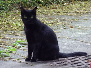 そと猫のお友だち ぽんこちゃん編。_a0143140_19465779.jpg