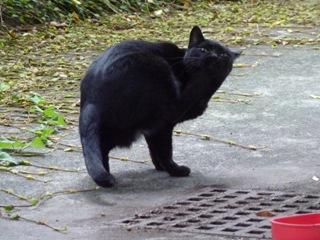 そと猫のお友だち ぽんこちゃん編。_a0143140_19494519.jpg