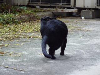 そと猫のお友だち ぽんこちゃん編。_a0143140_1951697.jpg