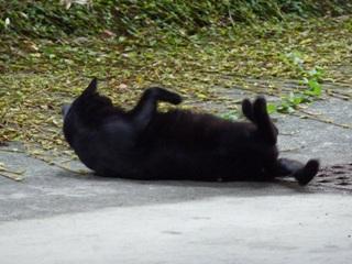 そと猫のお友だち ぽんこちゃん編。_a0143140_20293995.jpg