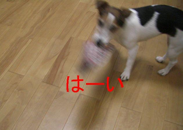 f0053952_17263247.jpg