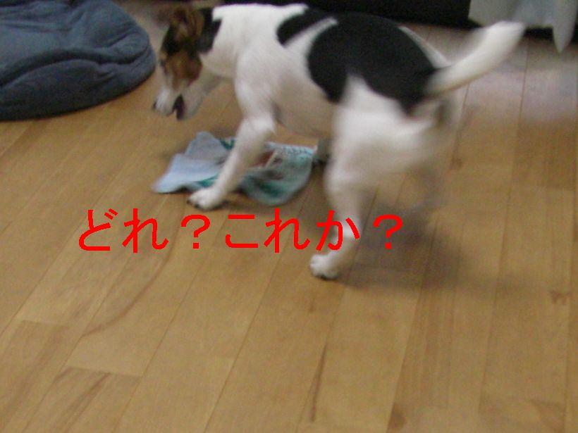 f0053952_1727204.jpg