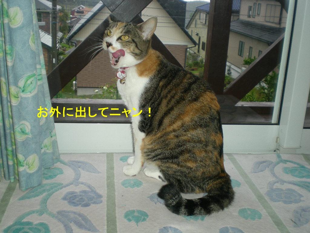 2010年10月12日(火)豪雨と虹と晴れ間と!_f0060461_10145885.jpg