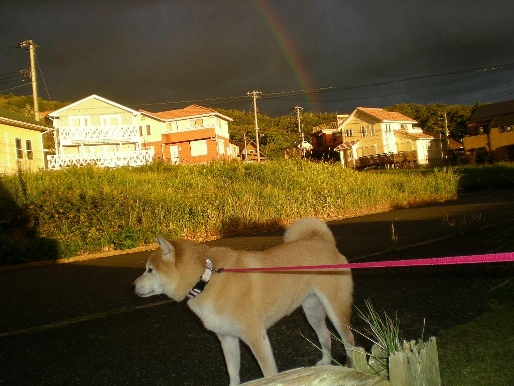 2010年10月12日(火)豪雨と虹と晴れ間と!_f0060461_10155121.jpg
