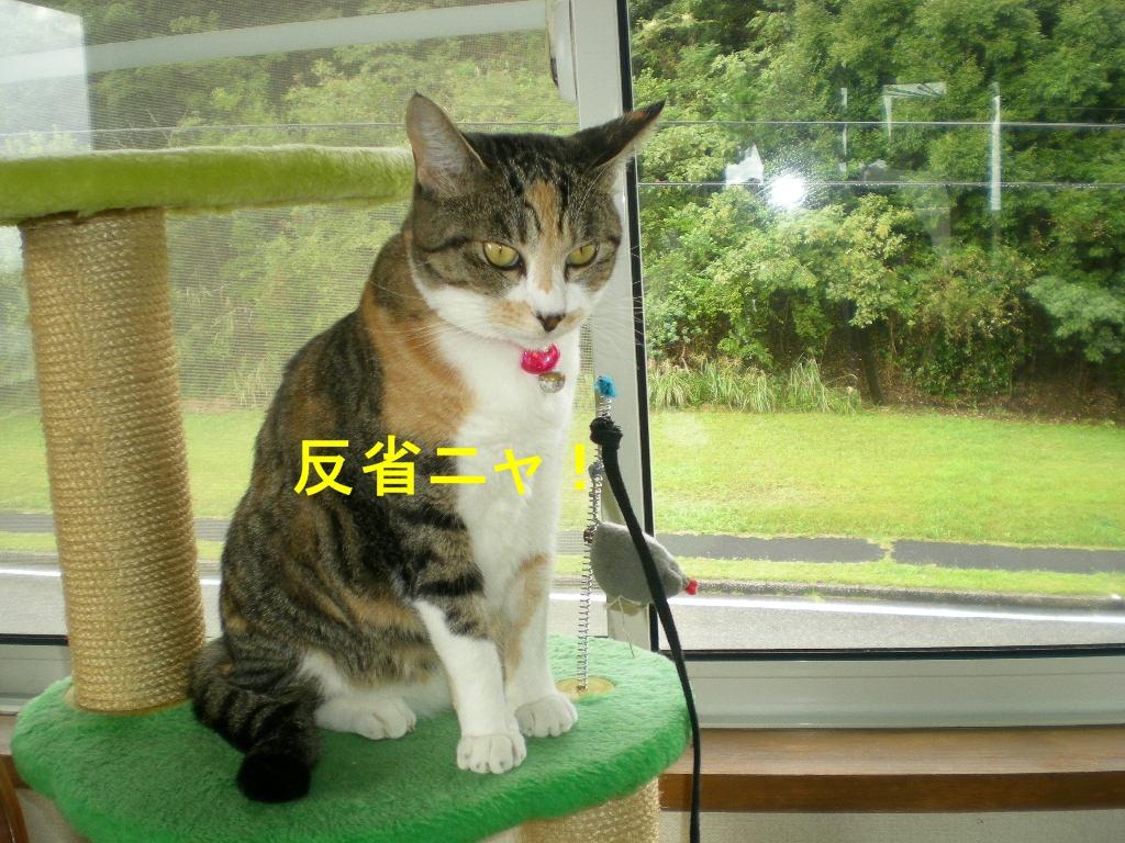2010年10月12日(火)豪雨と虹と晴れ間と!_f0060461_1019649.jpg