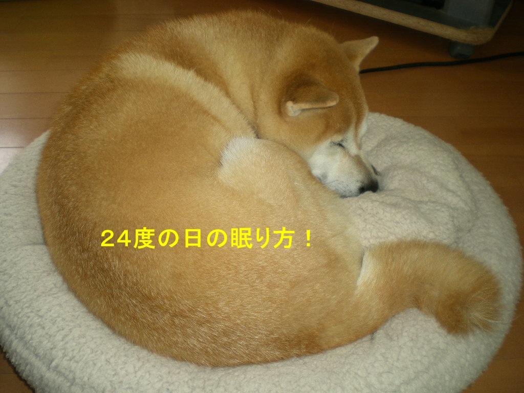 2010年10月12日(火)豪雨と虹と晴れ間と!_f0060461_1022126.jpg