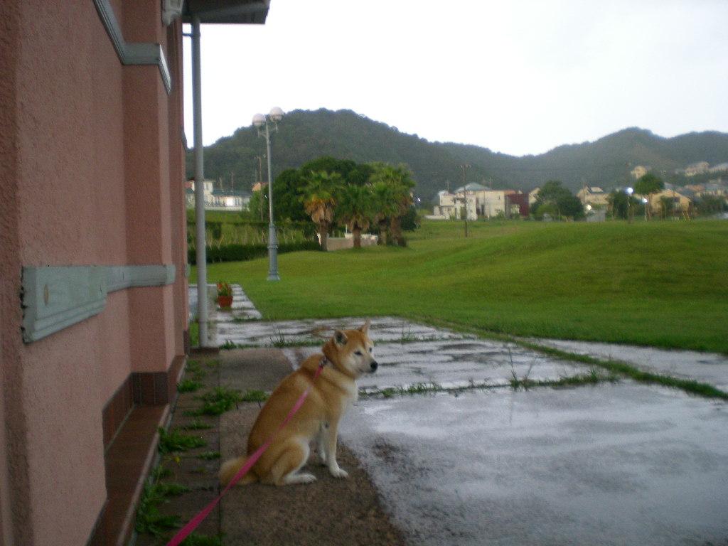 2010年10月12日(火)豪雨と虹と晴れ間と!_f0060461_9562534.jpg