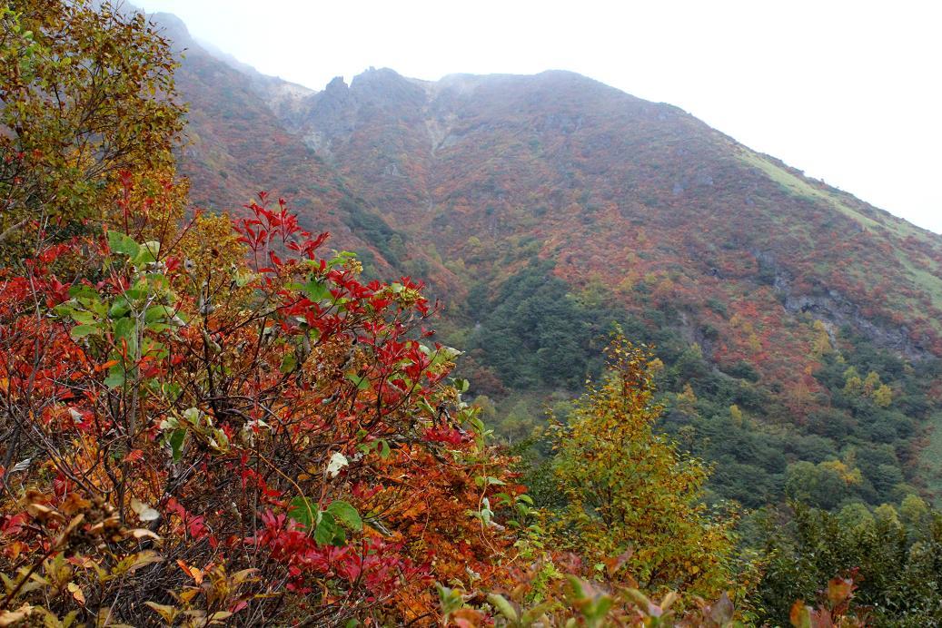 那須・茶臼岳(ちゃうすだけ)は雨だった_a0107574_19461323.jpg