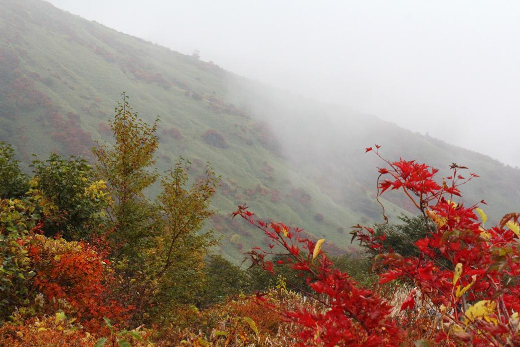 那須・茶臼岳(ちゃうすだけ)は雨だった_a0107574_1947811.jpg