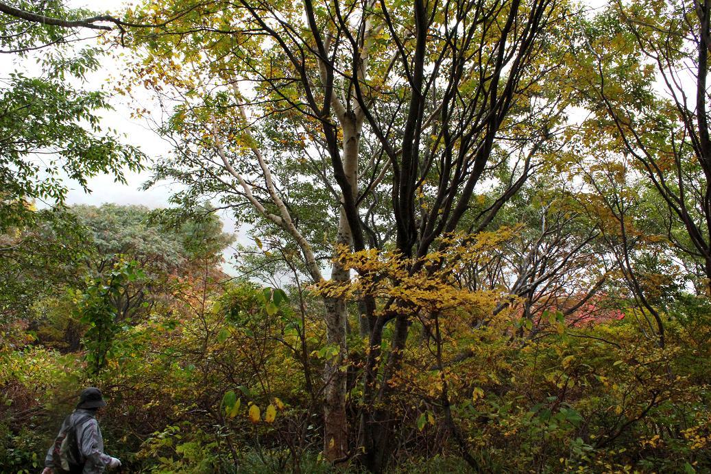 那須・茶臼岳(ちゃうすだけ)は雨だった_a0107574_19481161.jpg