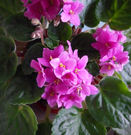 ぼちぼち咲いている花と、パンジー苗の植え替え_a0136293_17543719.jpg