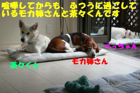 f0121712_1461530.jpg