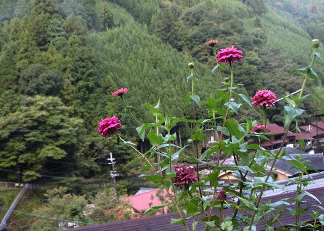 中川の里 _e0048413_18495024.jpg