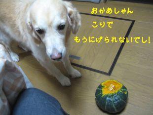 b0008217_22392670.jpg