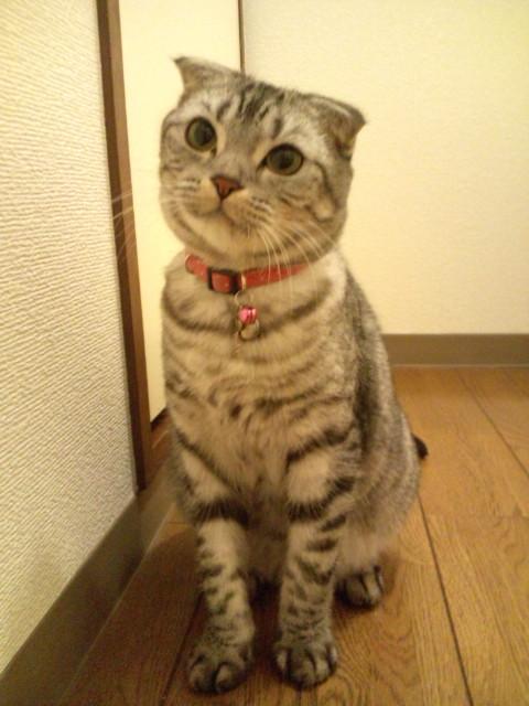 U^エ^U まってるにゃん(笑)☆渋谷Bar Music☆ http://ktabrasil.exblog.jp_b0032617_17302649.jpg