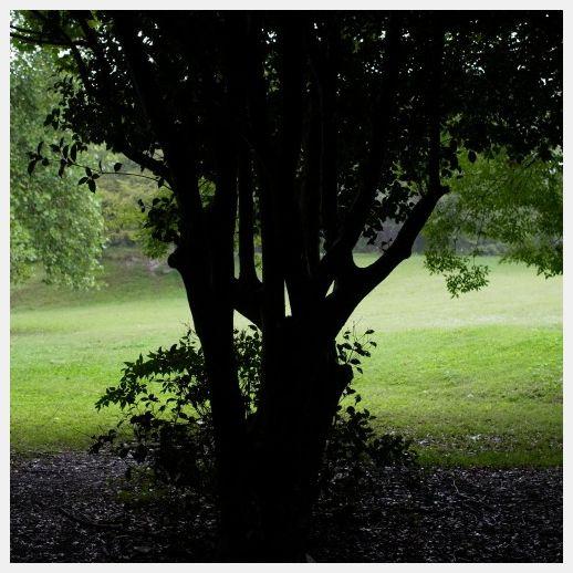 ■ 雨の日 再開_b0148920_1923114.jpg
