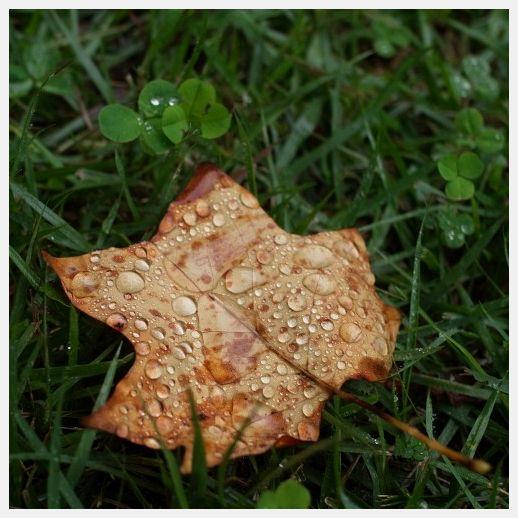 ■ 雨の日 再開_b0148920_1924682.jpg