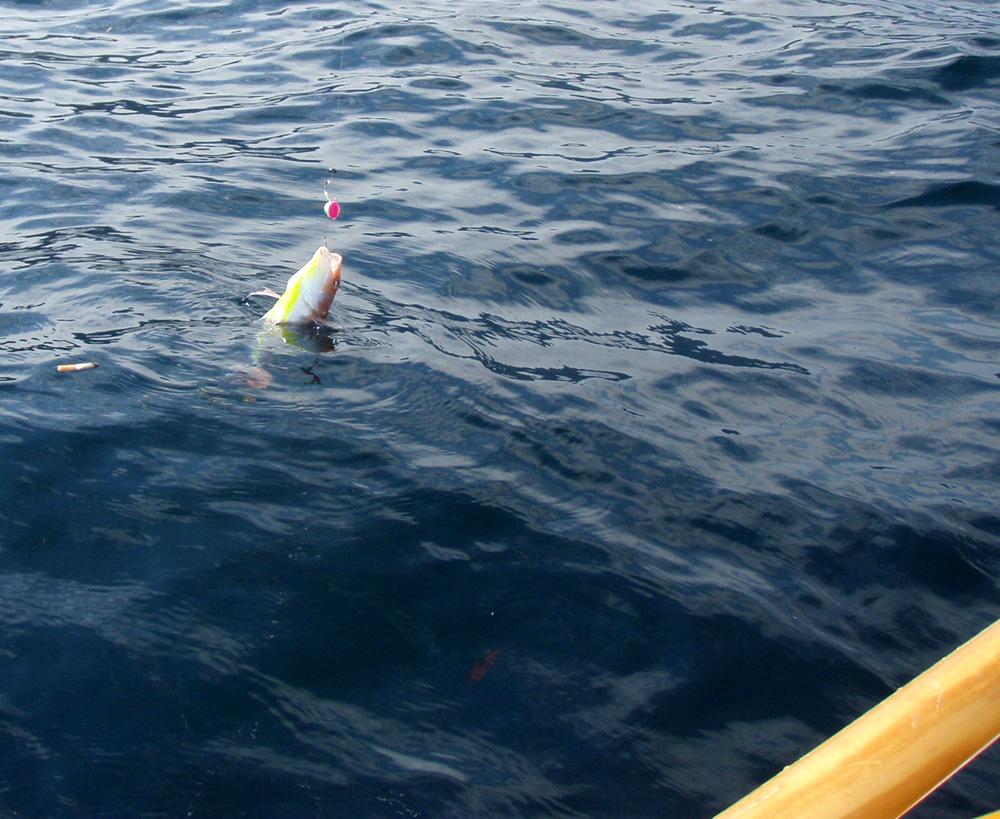 2010年10月13日(水) 三重県賀田湾 2馬力ボート釣り_d0171823_23504455.jpg