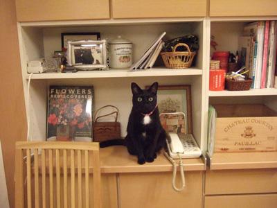 艶猫ロビン。_c0048042_048528.jpg
