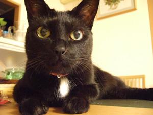 艶猫ロビン。_c0048042_0595318.jpg