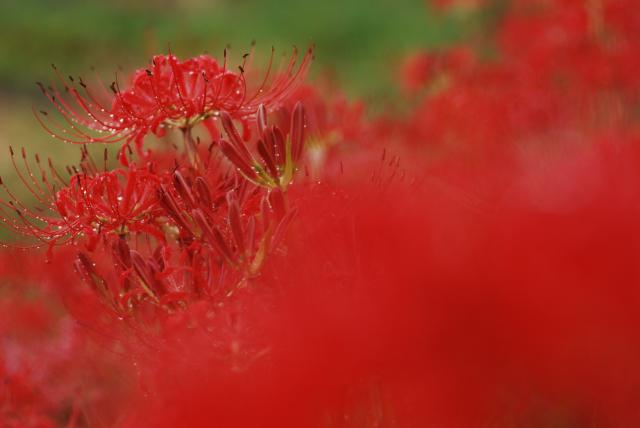 赤の季節も終わりに近づく_b0146751_23502493.jpg