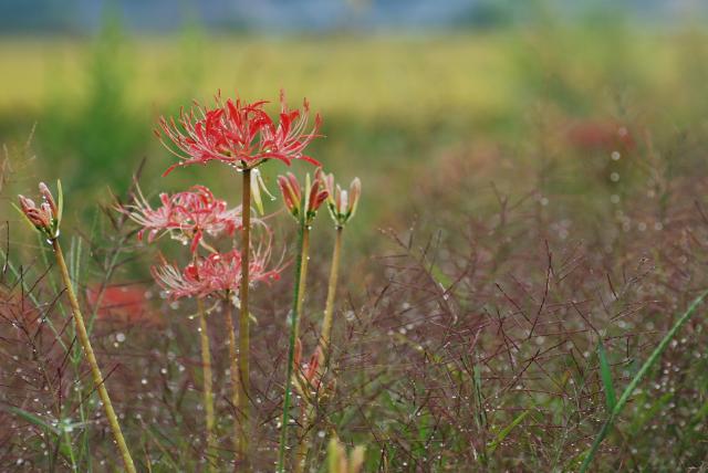 赤の季節も終わりに近づく_b0146751_2351470.jpg