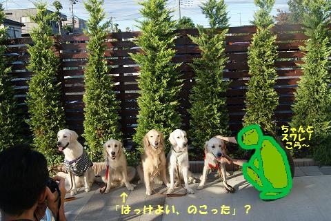 c0214455_2015384.jpg