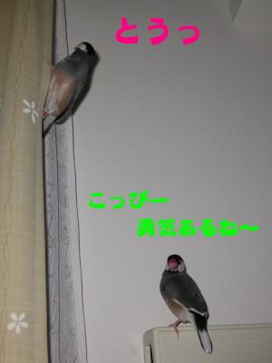 b0158061_228860.jpg