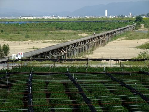 休日ライド 池田~大山崎~流れ橋 サイクリングコースのご紹介_d0174462_23102996.jpg