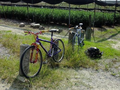 休日ライド 池田~大山崎~流れ橋 サイクリングコースのご紹介_d0174462_2311326.jpg
