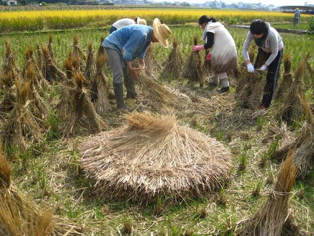 まずは藁塚とか枝豆とか・・_b0087077_20214550.jpg