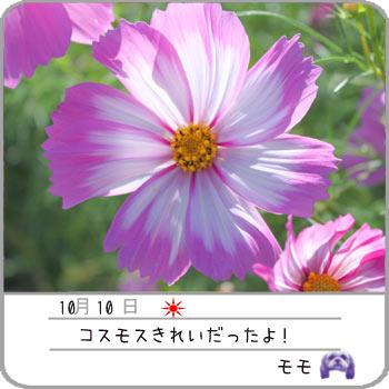 b0024183_2057969.jpg