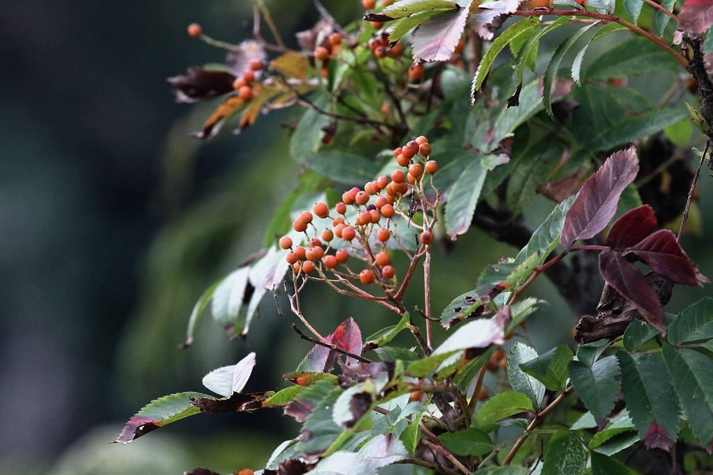 アオサギ/小さい秋、見つけた_b0024798_528029.jpg