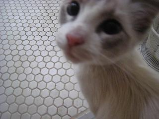 Kittyが突然、やってきた!_d0154102_1164299.jpg