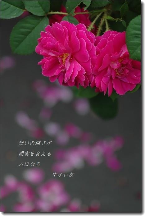 b0152416_226975.jpg