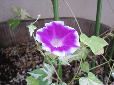 花 と おでん。_b0157216_2231285.jpg
