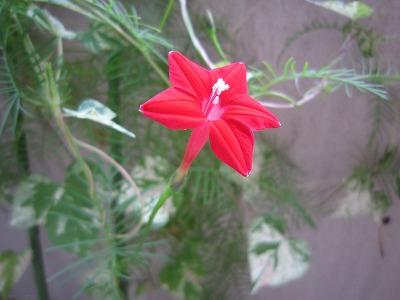 花 と おでん。_b0157216_22315191.jpg