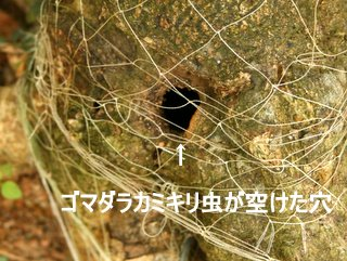 b0197433_1545196.jpg