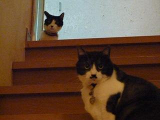 猫のお友だち クロくん 珠ちゃん ビビちゃん編。_a0143140_2345387.jpg